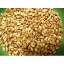 Зерно пшеница белая (органика) 50% (кг)