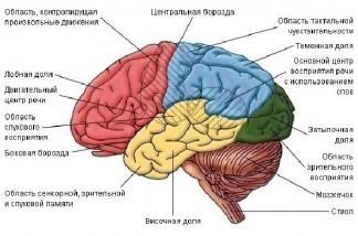 Про человеческий мозг